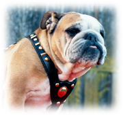 dog harness jewelry