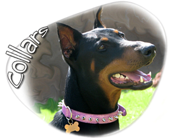 dog collars pet collars and dog jewelry